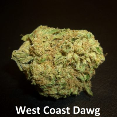 West Coast Dawg - 1