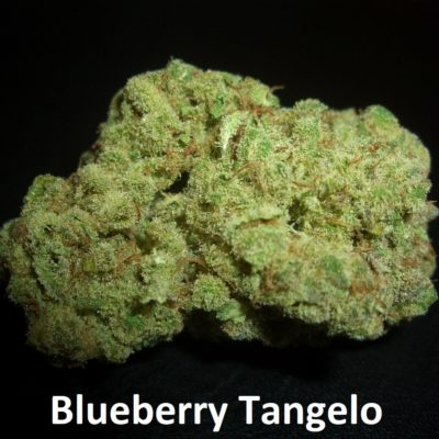 Blueberry Tangelo - 1