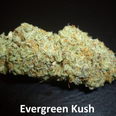 Evergreen Kush - 1